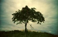 http://www.larsreinholdt.dk/files/gimgs/th-35_tree_web.jpg
